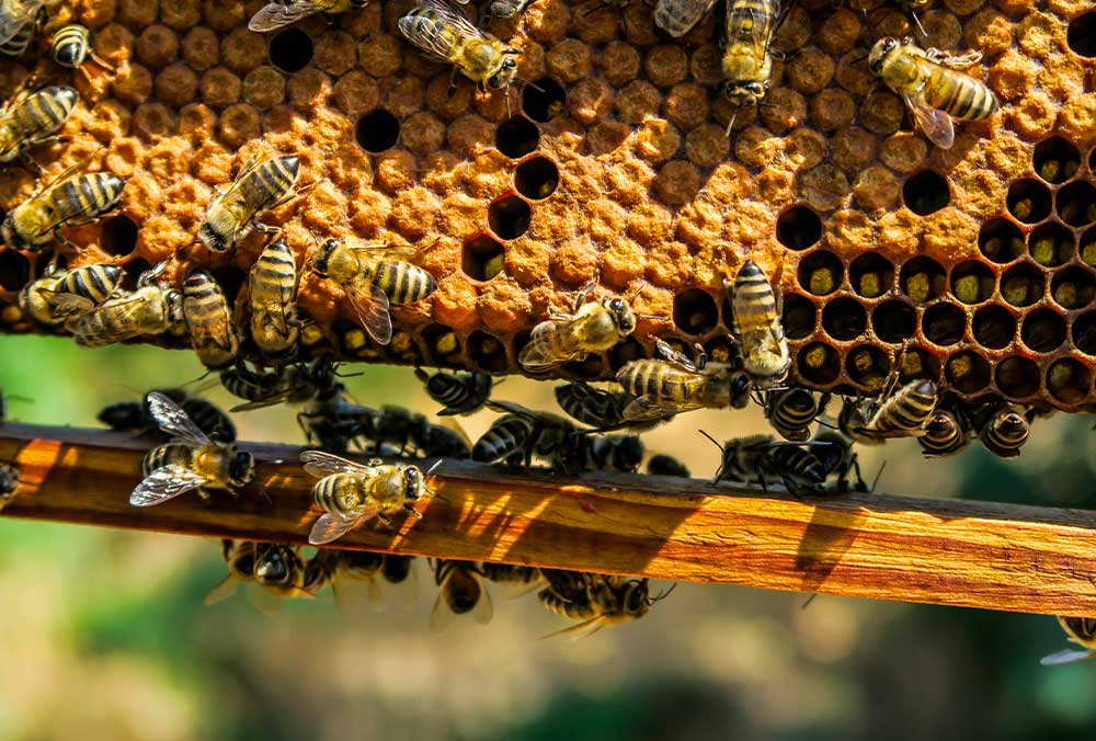 Beekeeping Dragoslavic