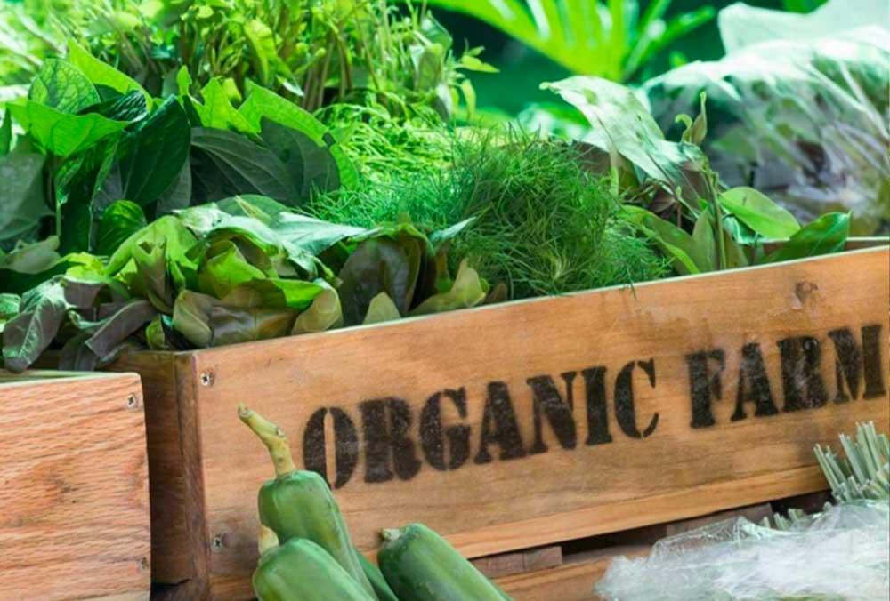 Rinella organic farm