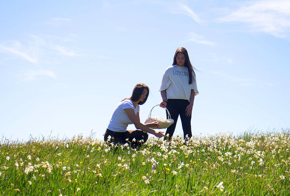 "Medicinal herbs picking in ""Blidinje Nature Park"""